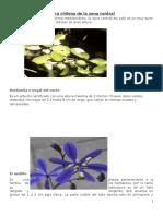Flora Chilena de La Zona Centra1