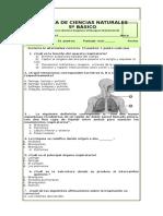 prueba 5° circulatorio y respiratorio
