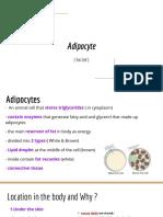 biology fat cell