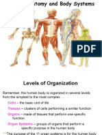 humanbody systems