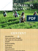 TEA  PLUCKERS  IN  SRILANKA