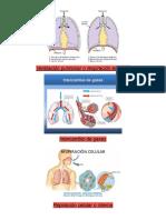 Ventilación Pulmonar o Respiración Externa