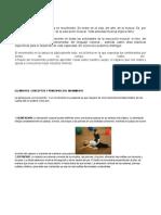 TERCERO ELEMENTOS CORPORALES.docx