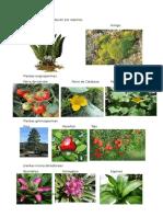 Plantas Que Se Reproducen Por Esporas