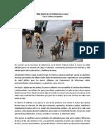 Maltrato de Los Perros de La Calle