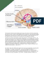 Surâsul Interior Și Amygdala