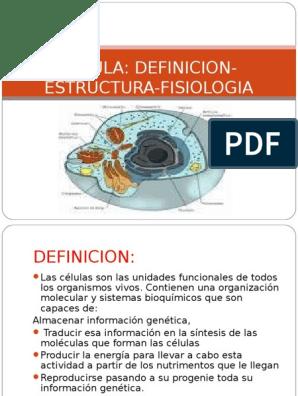 Celula Definicion Estructura Fisiologia Lisosoma Ribosoma