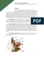Practica Organos de Los Sentidos Fisioterapia 2013