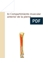 Compartimiento posterior de la pierna y articulación del tobillo