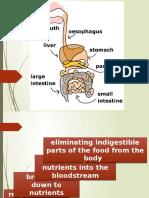Digestive System 101