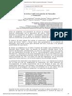 Evaluación de La Lima 'Tahití' en La Planicie de Maracaibo_ I