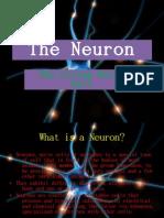 The Neuron (bigger slides)