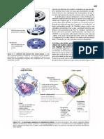 Livro Lehninger Princípios de Bioquímica 3 Edição Completo Parte3