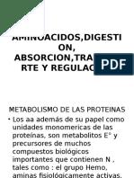 2 Aminoacidos,Digestion,