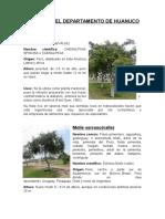 ARBOLES DEL DEPARTAMENTO DE HUANUCO - Estrada maylle ruth.docx