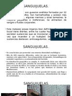 Sanguijuelas.pptx