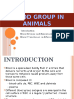Blood Group in Animal