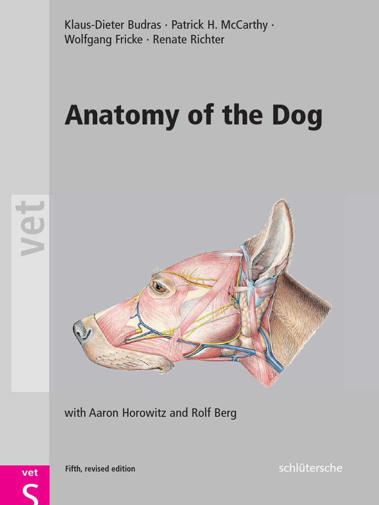 anatomy of the dog.pdf | Anatomical Terms Of Location | Arm