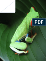 Costa Rican Frog.pdf