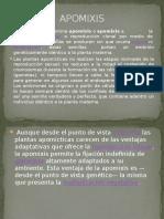 APOMIXIS.pptx