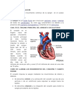 preguntas del sistema circulatorio para secundaria