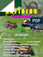 ANFIBIOS-Sistwemática1