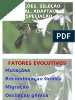 Biologia - Mutação, Adaptação, Seleção Natural e Especiação