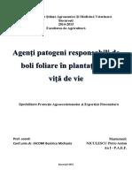 Agenti Patogeni Responsabil de Boli Foliare in Plantatiile de Vita de Vie