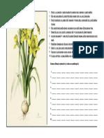 Narcisa, fisa botanica