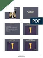 8. Predavanje - Skeleton Thoracis - Vlajkovic