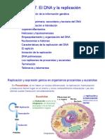 Tema 7. DNA y la replicacion