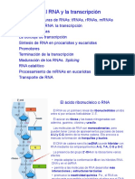 Tema 8. RNA y la transcripcion