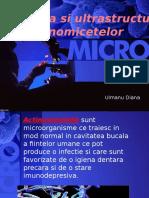 actinomicetele