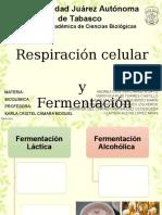 Respiración Celular y Fermentación