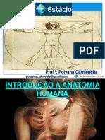 A anatomia humana basica