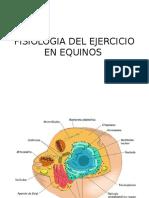 Fisiologia Del Musculo en Equinos Power Point