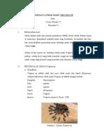 1.BUDIDAYA MADU TRIGONA_5 (1).pdf