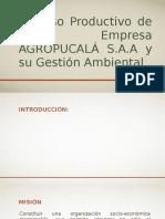 Proceso Productivo de La Empresa AGROPUCALÁ S