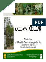 Budidaya Kelor
