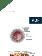 REPRO.2-PARTE-2.pptx