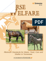 horse welfare.pdf