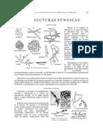 estructura fungica