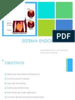 Endocrino 2