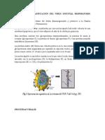 Taxonomía y Clasificación Del Virus Sincitial Respiratorio Humano