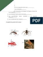Ejercicios de invertebrados. 2do Básico.