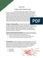 Apuntes Contraccion Muscular