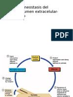 Homeostasis LEC-Na+.pptx
