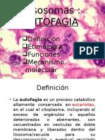 Autofagia