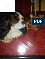 Pet Therapy - Instapaper - Clara Basso