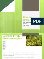 Phylos Del Reino Plantae